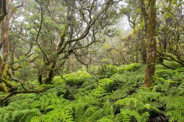 TNC Waikamoi Preserve